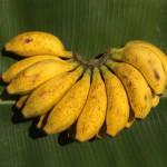 Banane Ambul