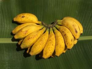 Angebot der Woche - Ambul Banane