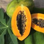 Papaya Golden