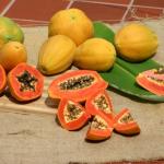 Papaya Ratna
