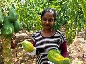 Anusha bei der Ernte