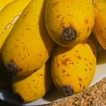 Banane Kollikutu