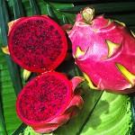 Drachenfrucht rot