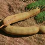 Urfrüchte - Tamarinde